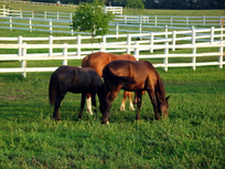 Pasture Fence for Horses